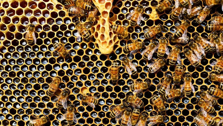Kommt die FF auch bei Bienen?